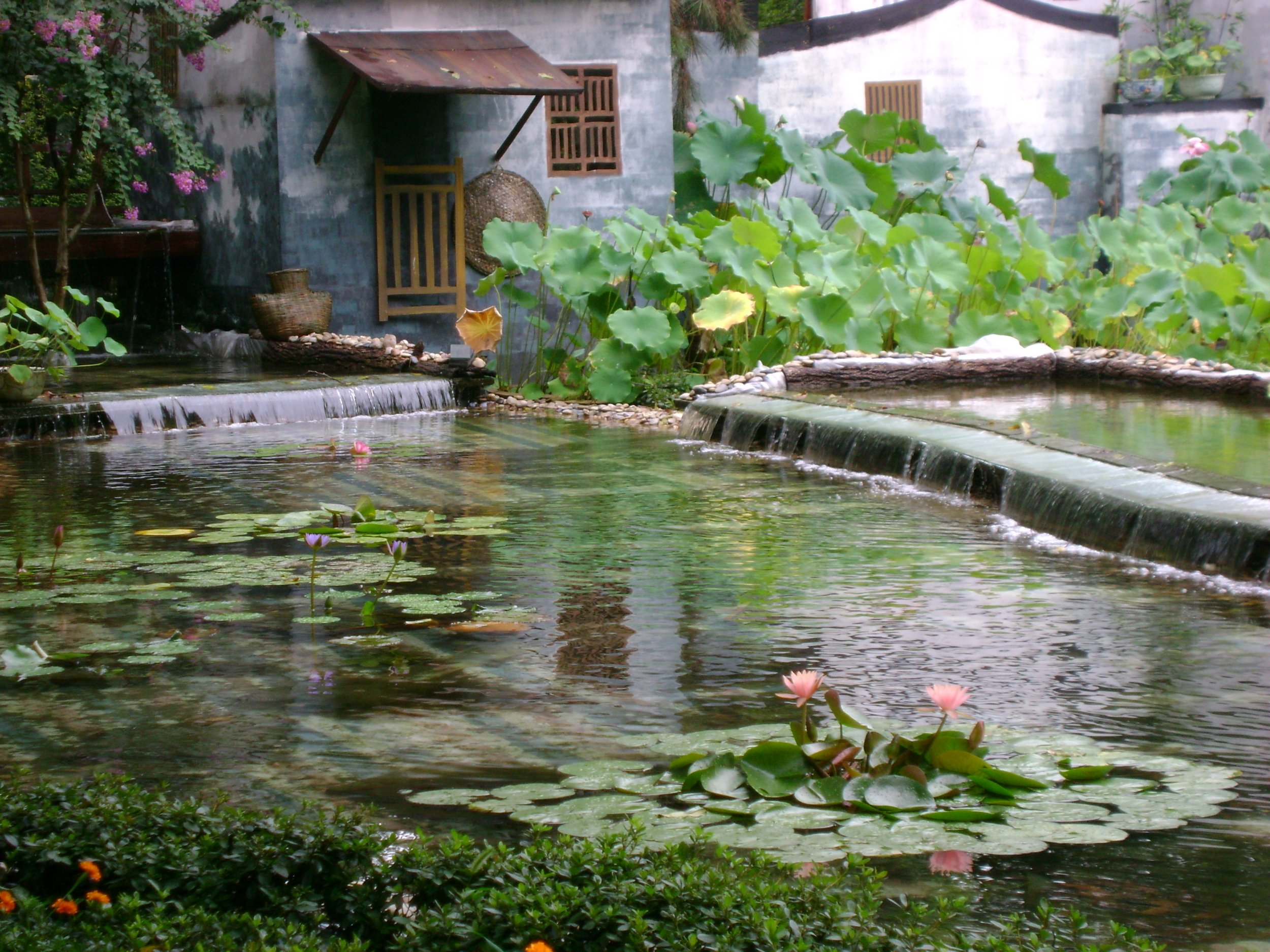 Giardino cinese maria nobili premio celeste 2011 for Giardino cinese