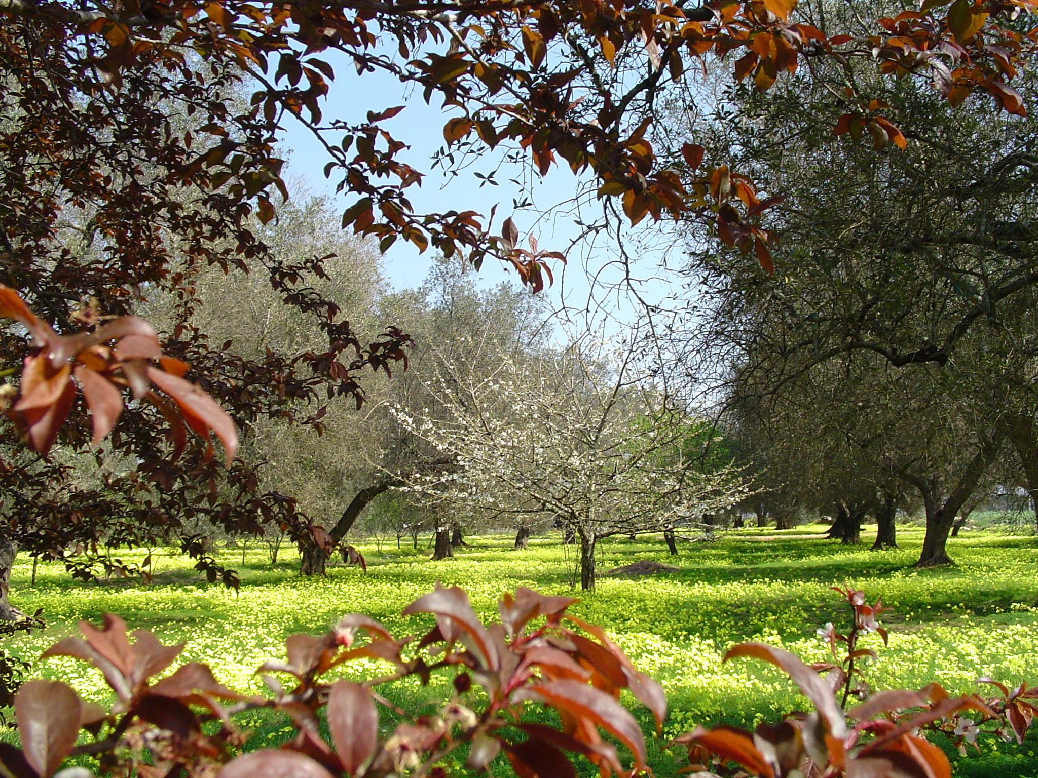 Il giardino dei ciliegi filomena sansevero opera celeste network - Il giardino dei ciliegi ...