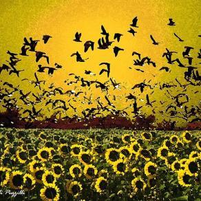 Volo giallo
