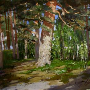 Evening pines