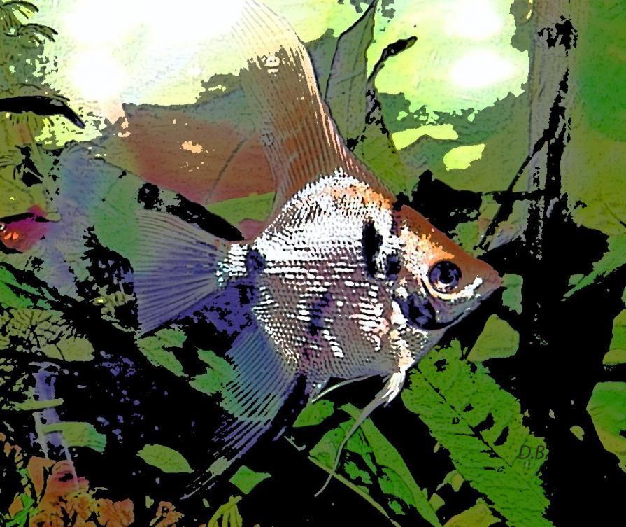 Il pesciolino